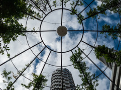 Looking Up by McGinlay