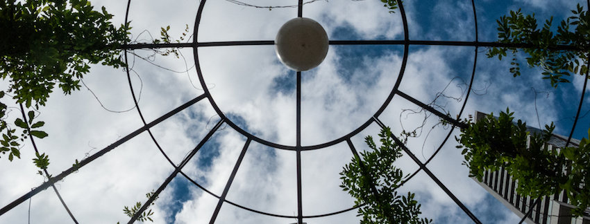 ORIGINAL PHOTO Looking Up by McGinlay