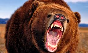 BEAR ATTACK – SUGAR BEAR THAT IS!