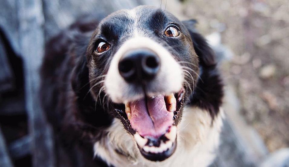 Dog Whisperer.jpeg
