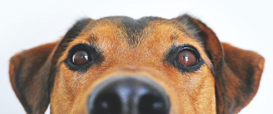 Dog Behaviourist.jpg