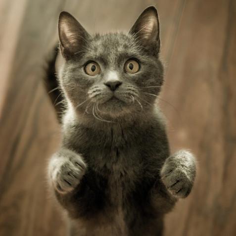 Cat Behaviourist 1.jpg