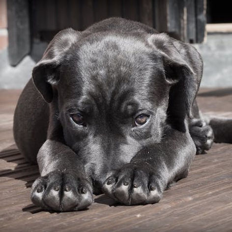 Dog Separation Anxiety 1.jpeg