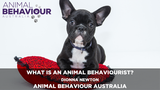 What is an Animal Behaviourist?