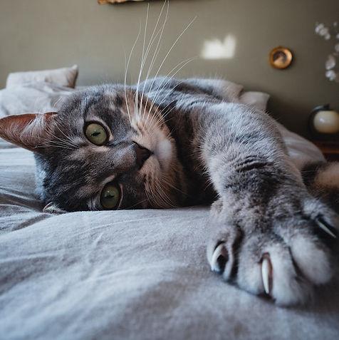 Cat Behaviour 2.jpg
