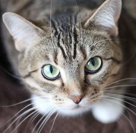 Cat Behaviour 1.jpg