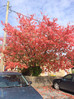The Sun is Out and Here's the Red Tree