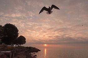 Item #7 Ascending Gull.jpg