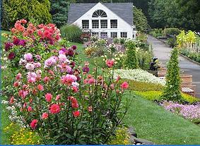 Item # 17 White Flower Farm.png