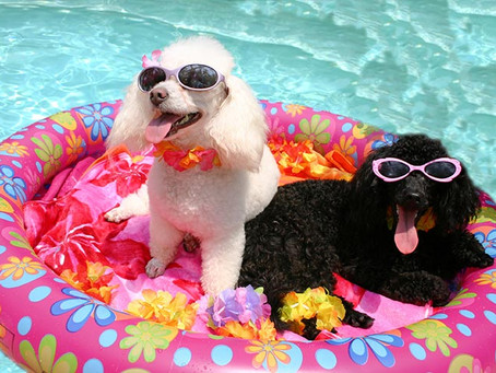 Warm Weather Care for Your Pets