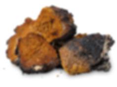 Several pieces of chopped chaga (Inonotu