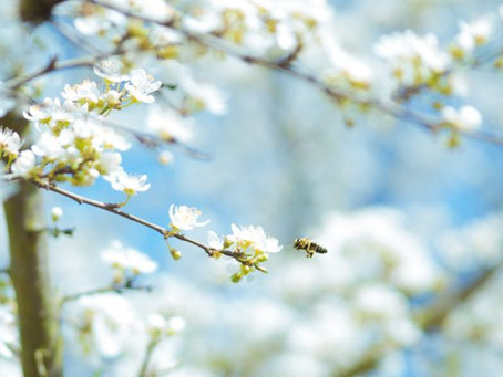 Natural Tips on How to Get Gorgeous and Healthy Skin This Springtime