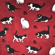 domestic kitty cats