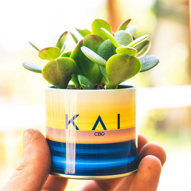 SMALL KAI SUCCULENT II.jpg
