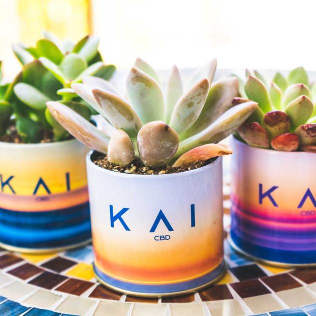 SMALL KAI SUCCULENT III.jpg