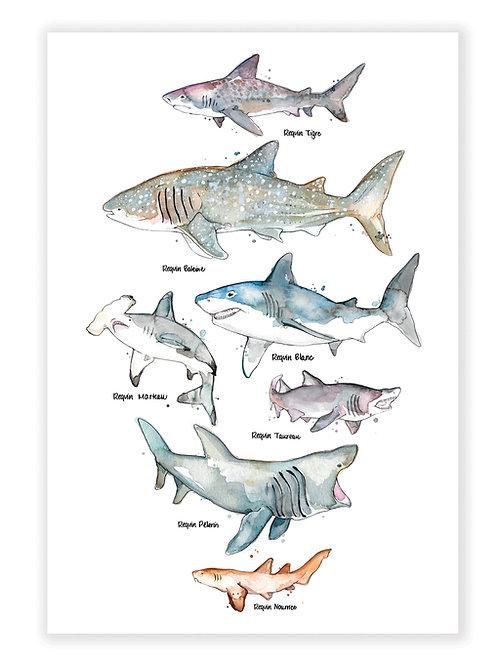 Les Requins - Affiche