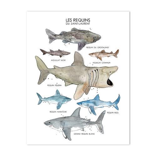 Les Requins du Saint-Laurent