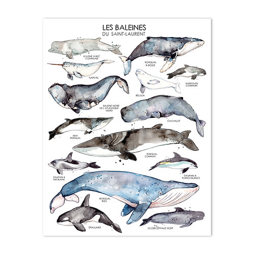 Les Baleines du Saint-Laurent