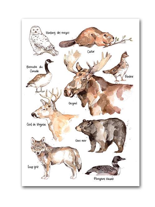 Les Animaux Emblématiques du Québec - Affiche
