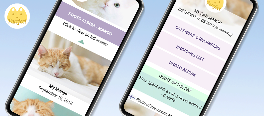 Purrfect Diary UX UI