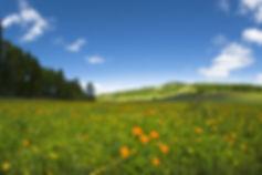 frühlingswiese.jpg