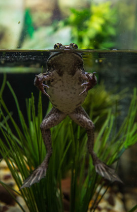 Frog at the Maritime Aquarium