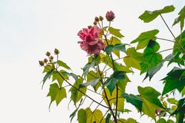 Flower in Baton Rogue