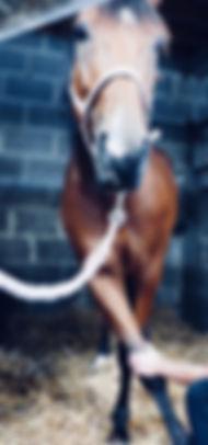 Ostéopathe équin en Normandie