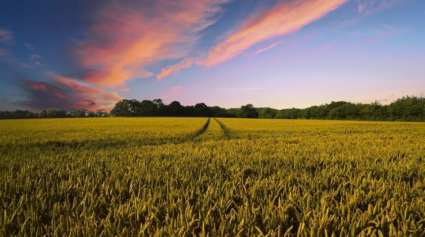 Sachsen ist Vorreiter bei der Digitalisierung der Landwirtschaft