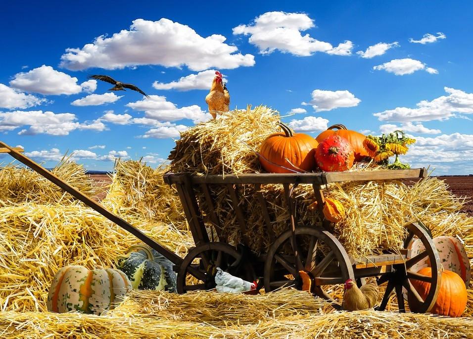 Lust auf Sachsen - Burgstädt wird Treffpunkt für Agrar-Lehrlinge aus ganz Europa