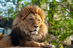 Einschränkungen im Zoobesuch Foto: Redaktion Lust auf Dresden