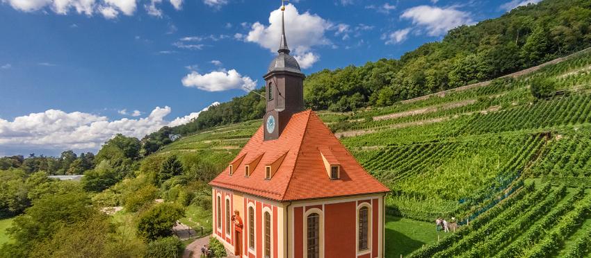 """""""Reblaus, Öchsle, Weinbergkirche"""" – Auf den Spuren der Weinbautradition am Pillnitzer Elbhang"""