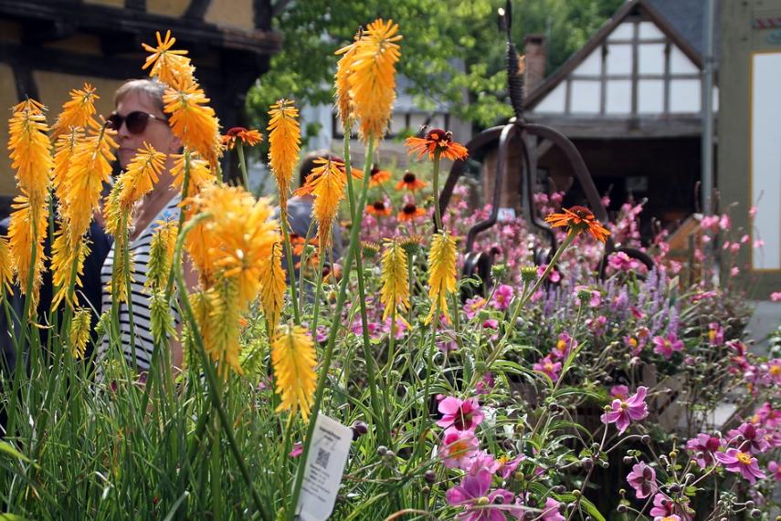 Wohin in Dresden und Umgebung - Röhrsdorfer Pflanzenmarkt