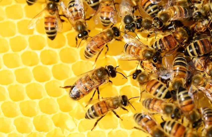Blick über den eigenen Tellerrand wagen - Neues Volkshochschulsemester erkundet die Welt der Bienen (Bild © Redaktion Lust auf Dresden)