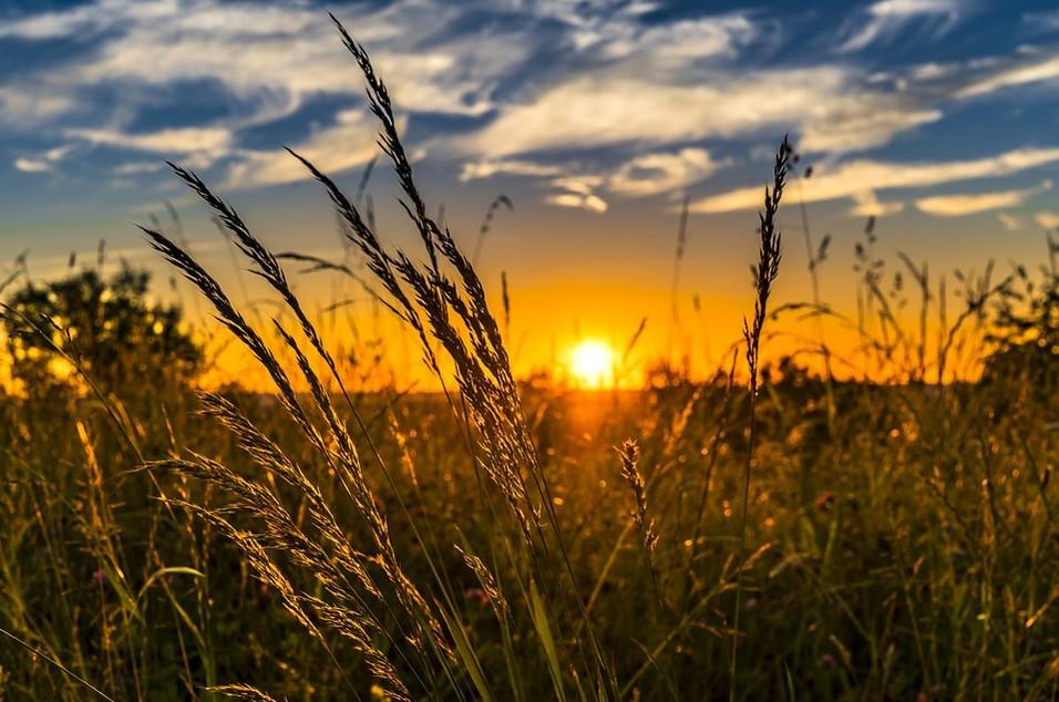 Sachsen ist spitze bei innovativer Landwirtschaft