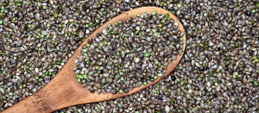 Hanf als Lebensmittelzutat: Das sollten Verbraucher wissen