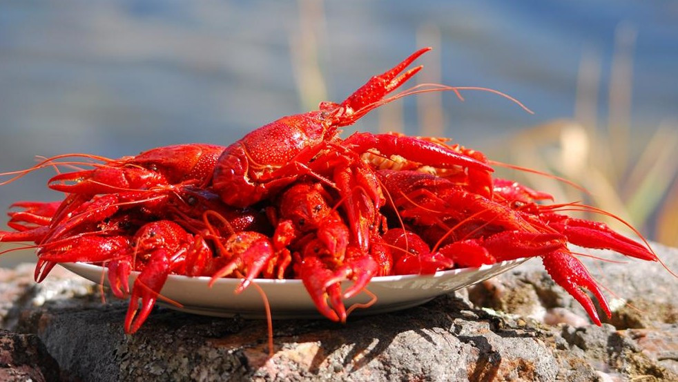 Das Unternehmen Holycrab hat sich auf invasive Tierarten spezialisiert. (Symbolbild © petrabarz/stock.adobe.com)