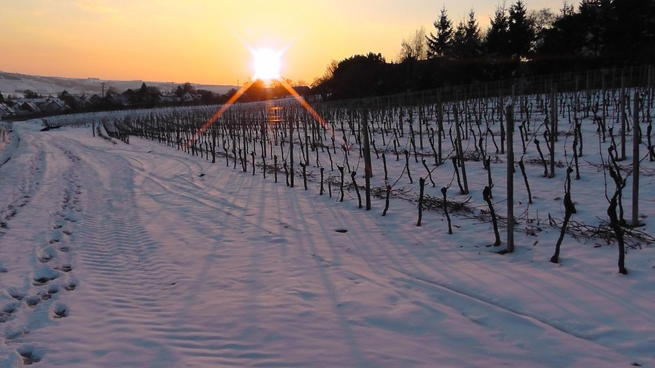 Lust auf Sachsen - Winterzauber in Meißens Weinbergen