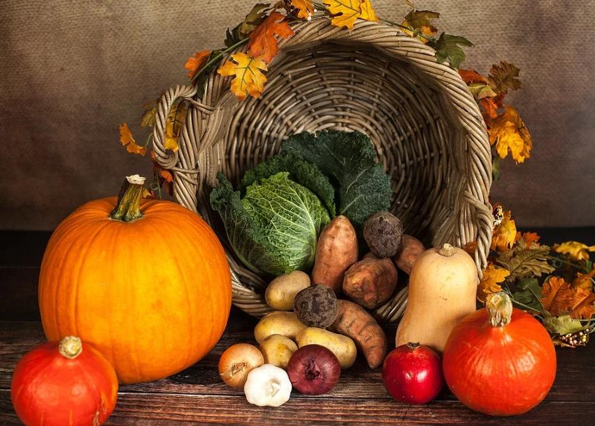 Wohin in Dresden und Umgebung - Herbstmarkt & Apfelfest
