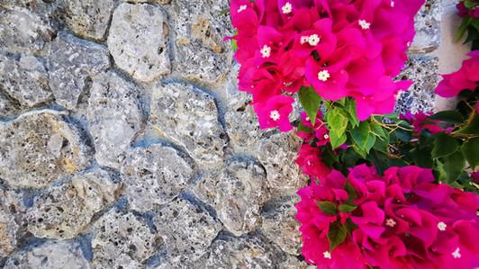 Flowers at Mathraki