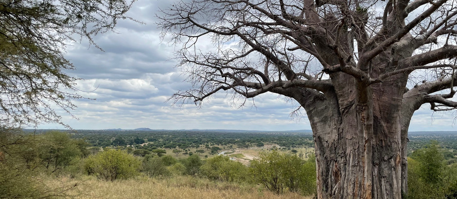 How A Safari Is Like Cooking Gluten Free