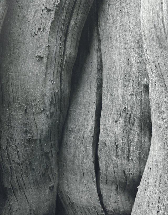 wood_02.jpg