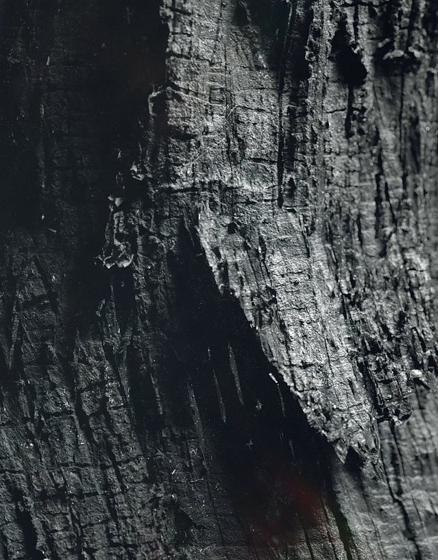 wood_03.jpg