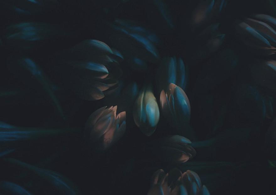 flowers_002.jpg