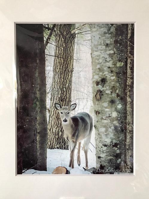 "11 x 14"", deer in the trees, number 38"