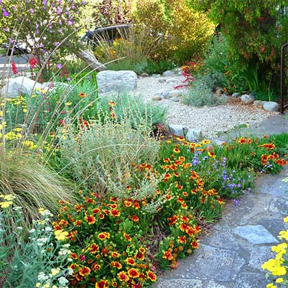 Native Plant Oasis