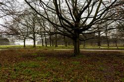 Cognizance-Richmond-The Park