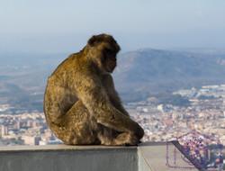 Gilbralter Rock Monkey View