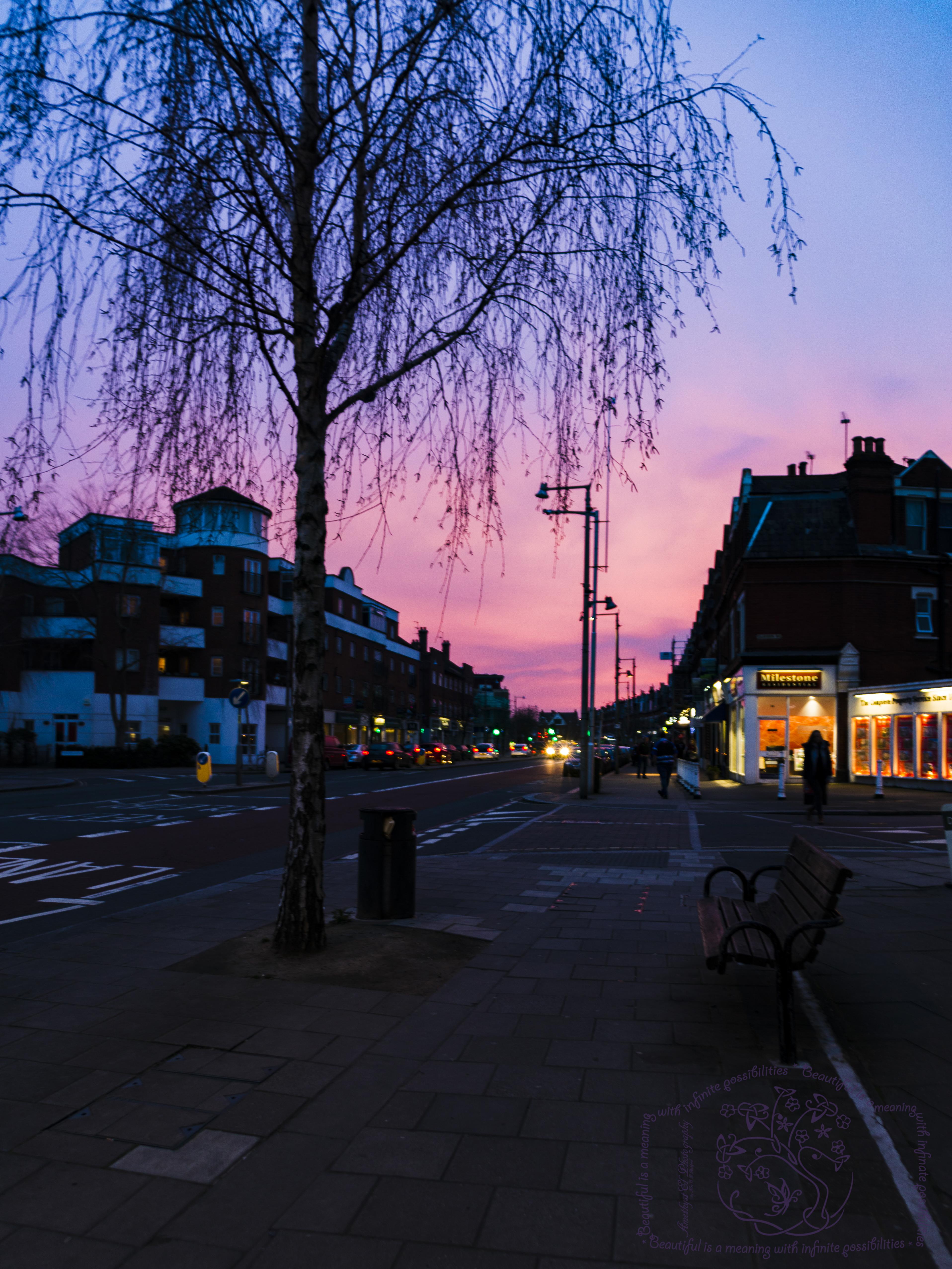 Cognizance-Twickenham-freedom