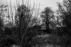 cognizance-moodiesburn_O5A7099